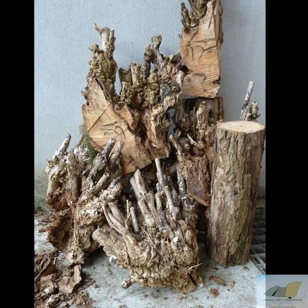 Acacia: net een koraalrif
